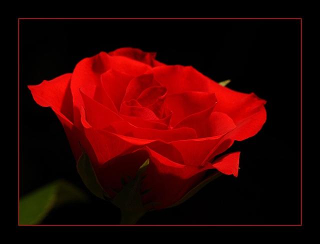 rose3s