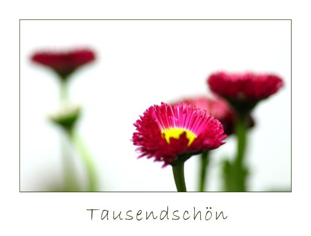 tausendfc