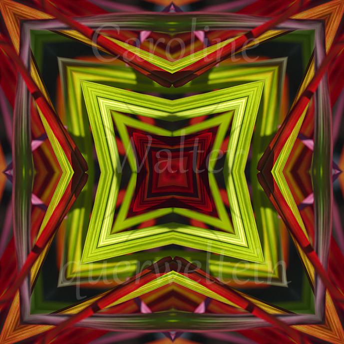 04xMandala-Gras-bunt