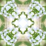 09xweissblum2
