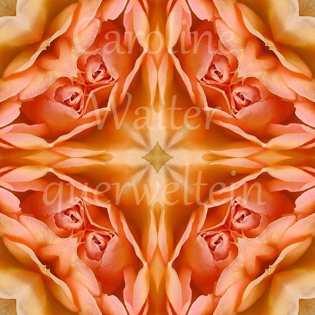 10xMandala-Rose2